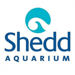 Shedd Aquarium Internship programs