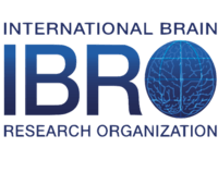The International Brain Research Organization (IBRO)  Scholarship programs